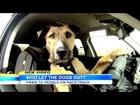 Dog Learns To Drive - Animal Rescue Shelter Teaches Dogs To Drive