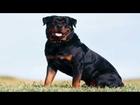 Top 10 popular big dog breeds