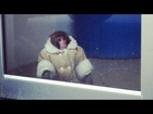Wandering Monkey in a Coat Found at IKEA